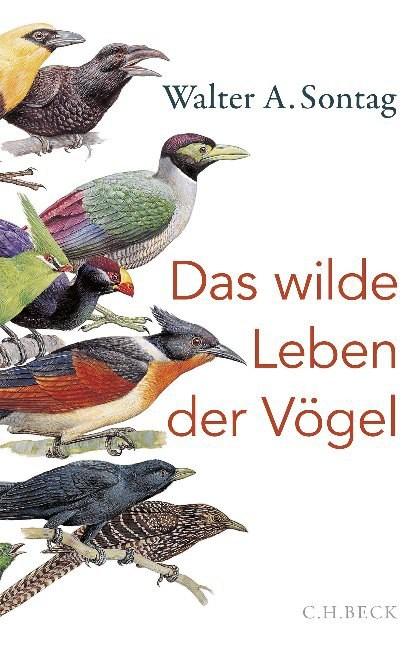 Das wilde Leben der Vögel